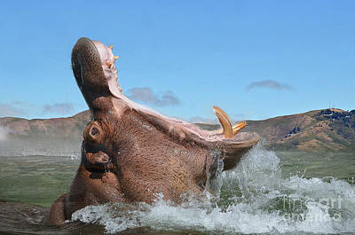 Photograph - Hippopotamus Bursting Out Of The Water by Jim Fitzpatrick