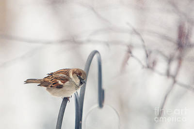 Photograph - His Eye Is On The Sparrow by Kay Pickens