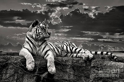 Art Print featuring the photograph His Majesty by Adam Olsen