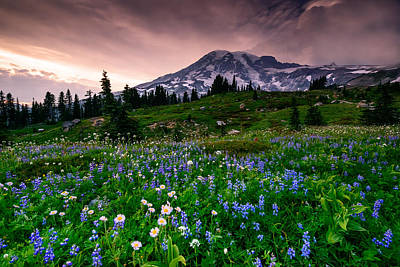 Meadow Photograph - His Majesty by Dan Mihai