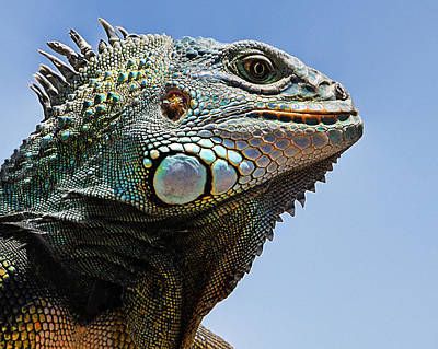 Photograph - His Majesty The Lizard by Wayne Wood