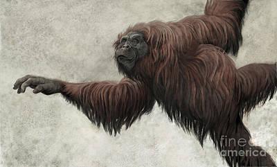 Orangutan Digital Art - Hispanopithecus Laietanus by Roman Garcia Mora