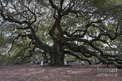 Photograph - Historic Angel Oak by Dale Powell