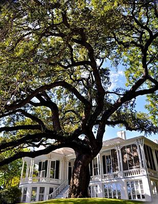 Photograph - Historic Austin Home by Kristina Deane