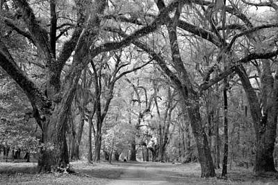 Photograph - Historic Blakeley State Park by Carol M Highsmith