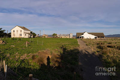 Contemplative Photograph - Historic D Ranch In Point Reyes California Dsc2366 by Wingsdomain Art and Photography