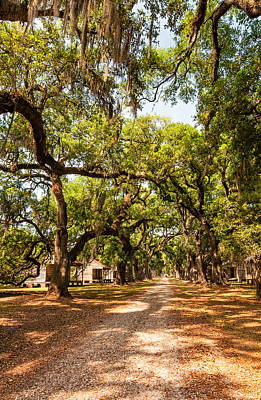 Live Oaks Photograph - Historic Lane by Steve Harrington