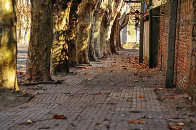 Lamborghini Cars - Historic Tree Lined Street by Jess Kraft