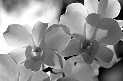 Photograph - Hit By Light. White Orchids by Jenny Rainbow