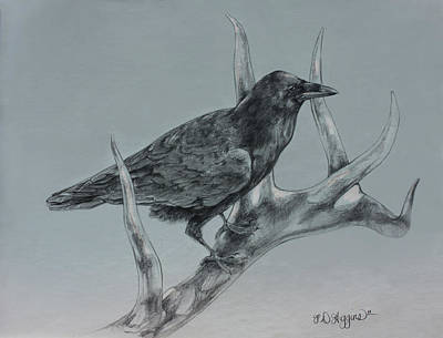 Crows Drawing - Hitchhiker Drawing by Derrick Higgins