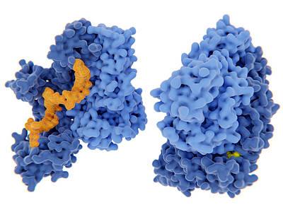 Photograph - Hiv-1 Reverse Transcriptase, Molecular by Juan Gaertner