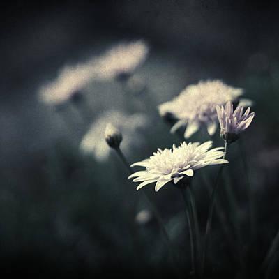 Photograph - Hiver Au Chaud by Taylan Apukovska