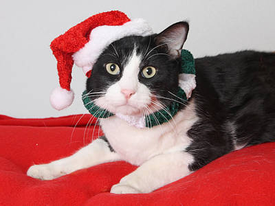 Photograph - Ho Ho Kitty  by Kimber  Butler