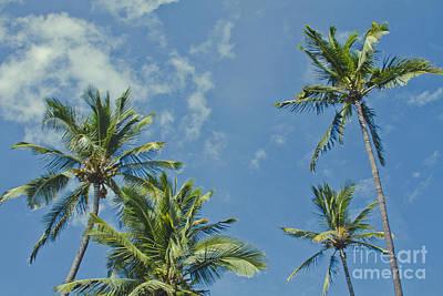Abstract Sailboats - Hoaloha Beach Niu Hawaiian Coconut Palms Maui Hawaii by Sharon Mau