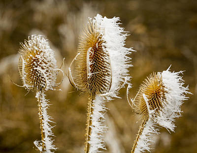 Ice Spikes Photograph - Hoar Frost 3 by Marilyn Hunt