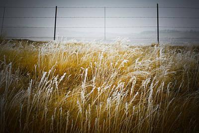 Photograph - Hoar Frost 6 by Marilyn Hunt