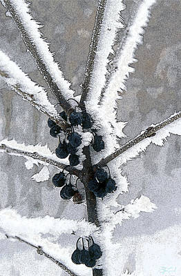 Photograph - Hoar Frost And Berries by Jon Lord