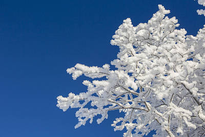 Hoar Frost And Clear Skies Art Print