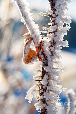 Photograph - Hoar Frost Branch by Terry Elniski