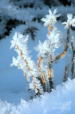 Photograph - Hoar Frost by Frank Townsley