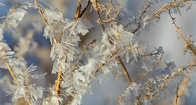 Ice On Branch Photograph - Hoar Frost On Branches  Alberta, Canada by Ron Harris