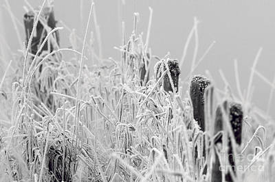 Photograph - Hoar Frost On Grass With Fence Posts by Sharon Talson