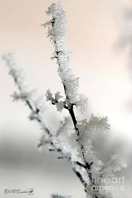 Photograph - Hoar Frost On The Lilac Bush by J McCombie