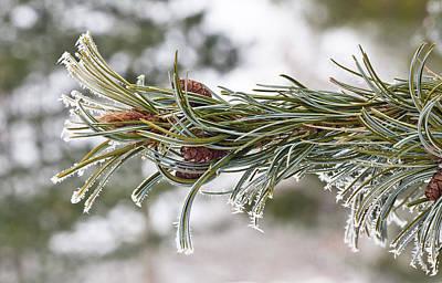 Hoar Frost Art Print by Steven Ralser