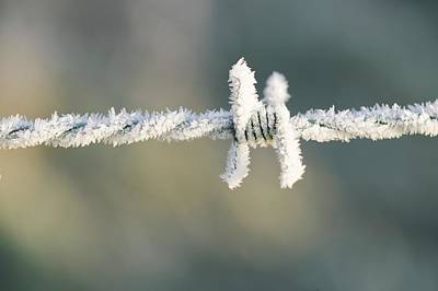 Hoare Frost On Barbed Wire Art Print by Ashley Cooper