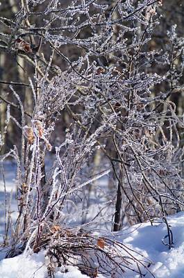Photograph - Hoarfrost 1 by Sheila Byers