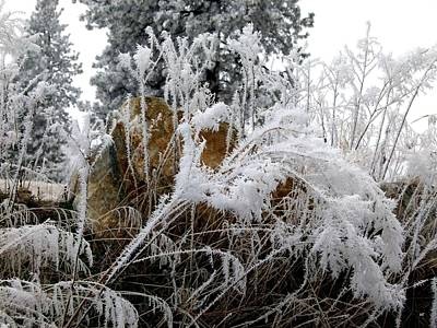Ice Fog Photograph - Hoarfrost 10  by Will Borden