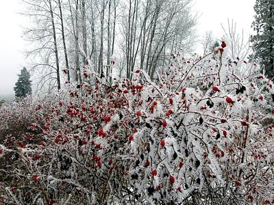 Ice Fog Photograph - Hoarfrost 12  by Will Borden