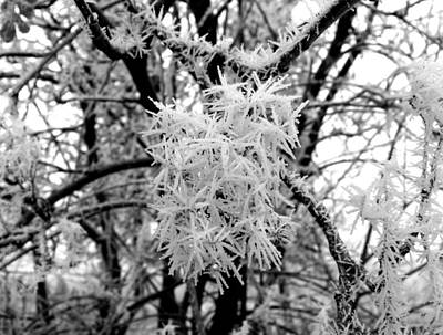 Photograph - Hoarfrost 13  by Will Borden