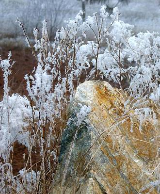 Photograph - Hoarfrost 23 by Will Borden