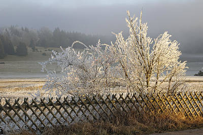 Photograph - Hoarfrost In Winter by Matthias Hauser