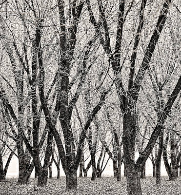 Photograph - Hoarfrost Orchard by Britt Runyon