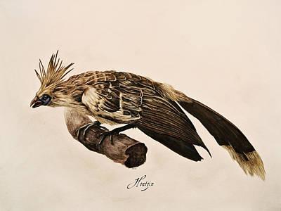 Hoatzin Art Print by Rachel Root
