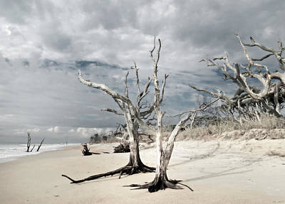 Hobcaw Boneyard Beach 2 Art Print