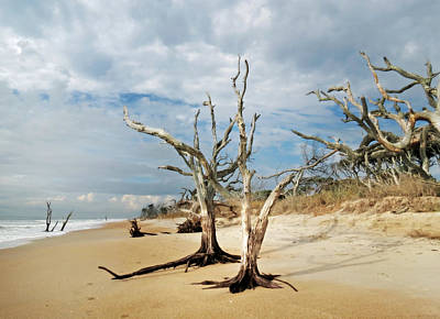 Photograph - Hobcaw Boneyard Beach by Deborah Smith