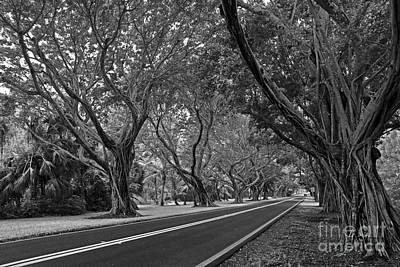 Hobe Sound Bridge Rd. West II Art Print by Larry Nieland