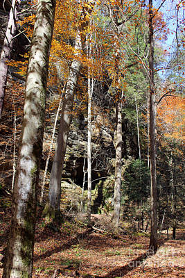 Photograph - Hocking Hills Trees by Karen Adams