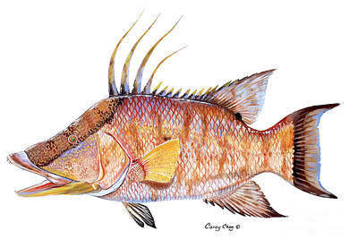 Hog Fish Print by Carey Chen