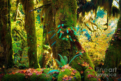 Olympic Peninsula Photograph - Hoh Grove by Inge Johnsson