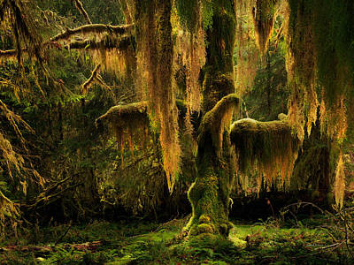 Hoh Rain Forest Art Print by Leland D Howard