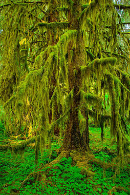 Hoh Rainforest Heavy Weight Art Print