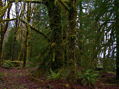 Photograph - Hoh Rainforest by Jeanette C Landstrom
