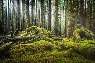 Hoh Rainforest Log Jam Art Print