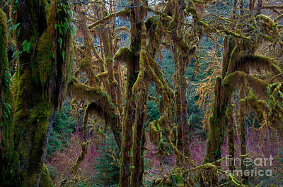 Photograph - Hoh Rainforest, Olympic National Park by Mark Newman