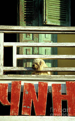 Photograph - Hoi An Dog 01 by Rick Piper Photography
