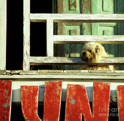 Photograph - Hoi An Dog 02 by Rick Piper Photography